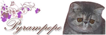 Pyrampepe